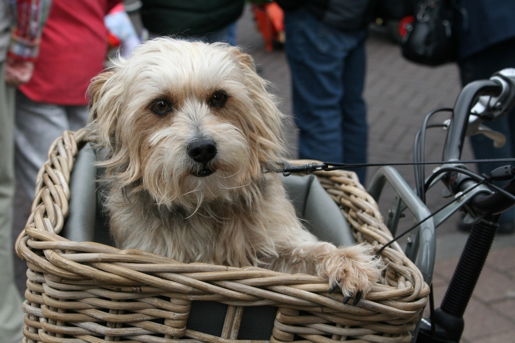 How to Safely Bike With Your Dog