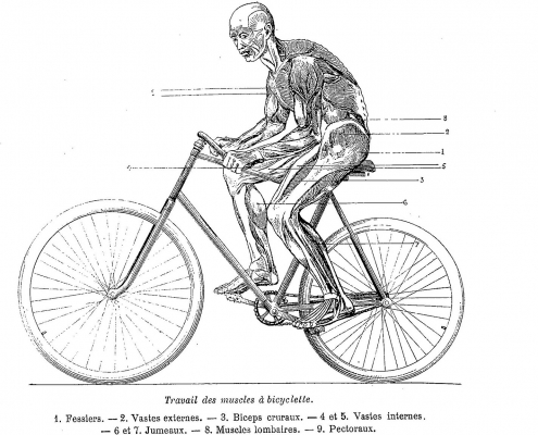 What Muscles are used When Riding a Bike?