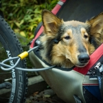 How to Bring your Dog on a Bike Ride
