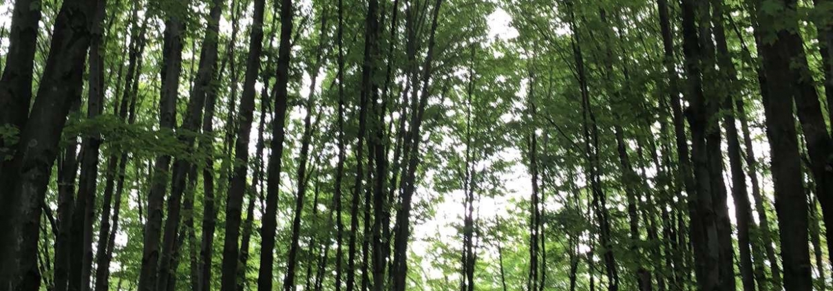 Moraine State Park Bicycle Trail through the Woods